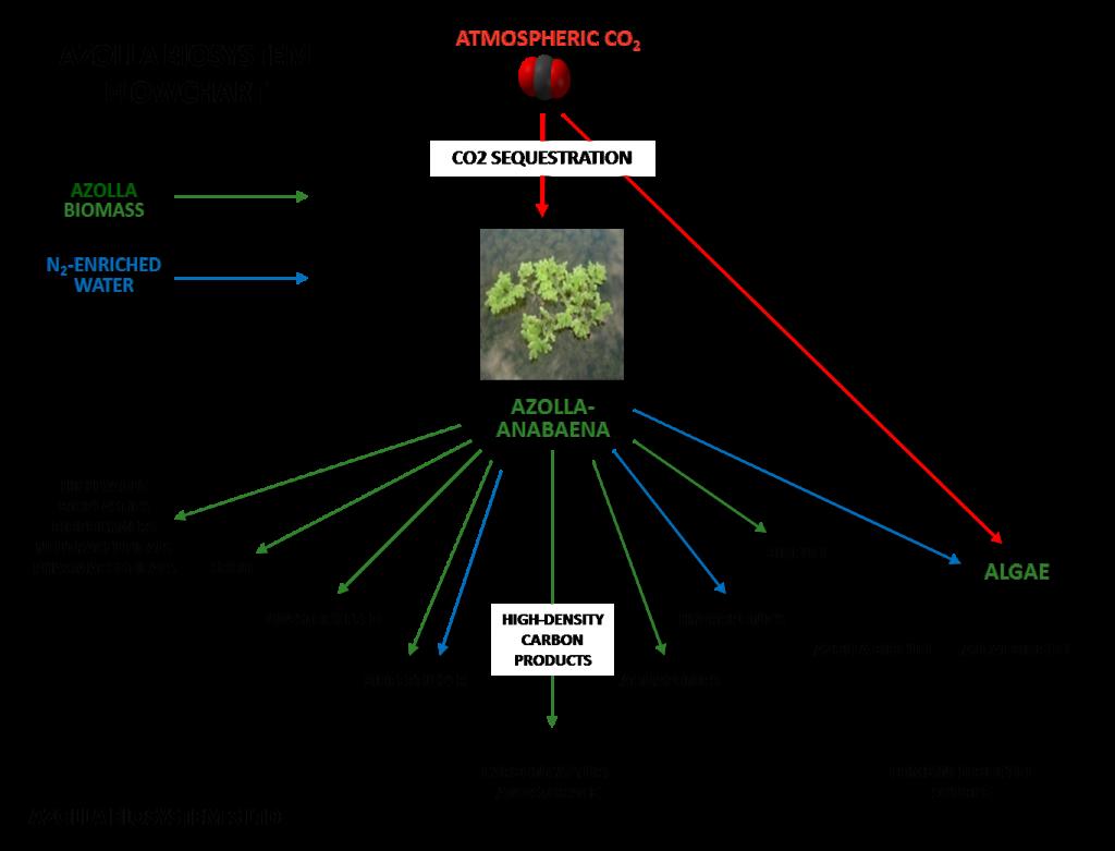 Azolla flow chart
