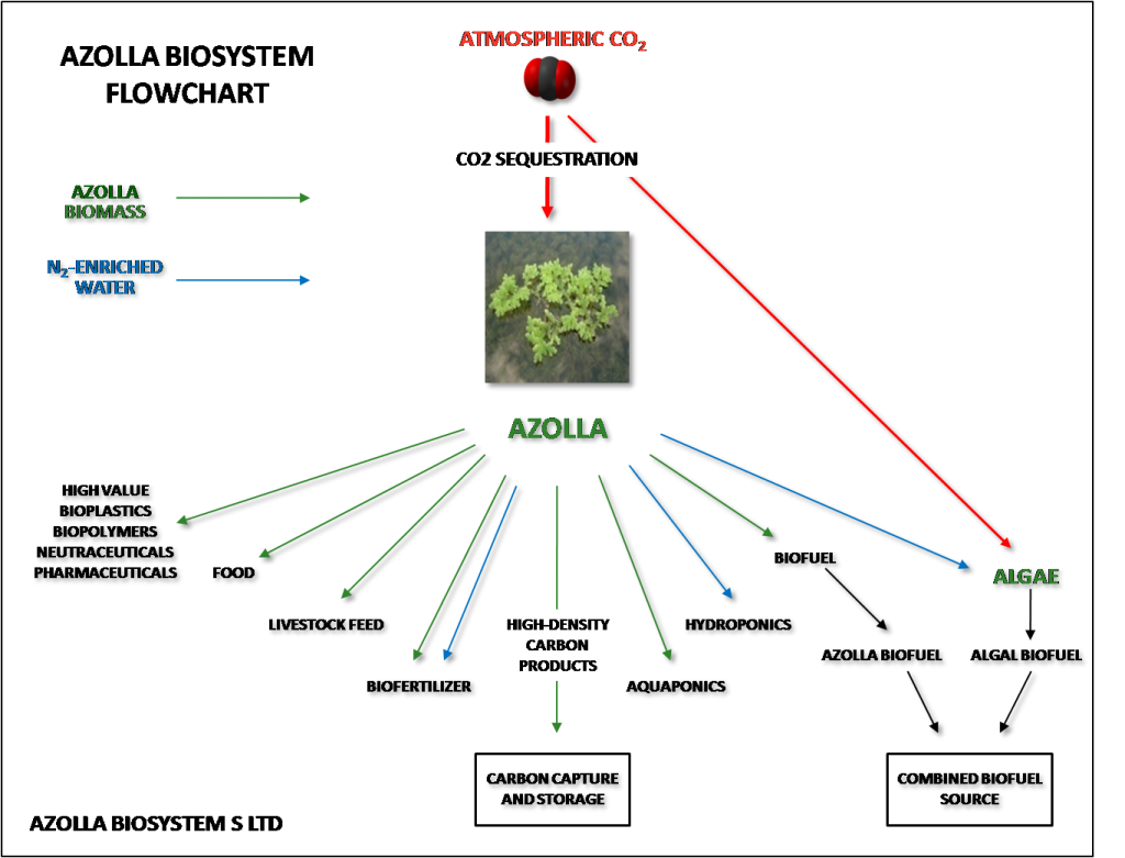 azolla flow chart NEW